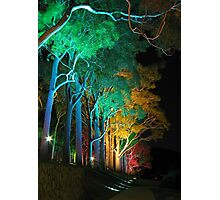 Kings Park Lights Photographic Print