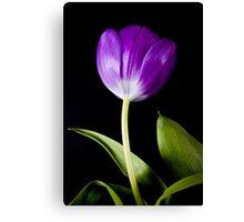 Purple on Black Canvas Print