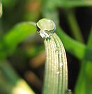 tiny green marble by millymuso