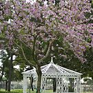 Neff Park, La Mirada, CA USA In the spring.  All Rights Reserved; Lei Hedger Photography by leih2008