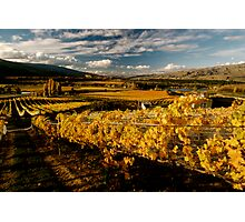Gate 22 Vineyard NZ Photographic Print