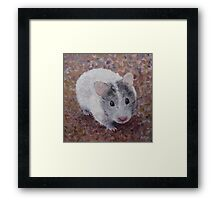 Jasmine My Hamster Framed Print