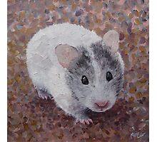 Jasmine My Hamster Photographic Print