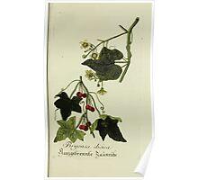Plantarum Indigenarum et Exoticarum - Lukas Hochenleitter und Kompagnie 1788 - 319 Poster