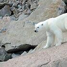 Polar King by LouiseLafleur