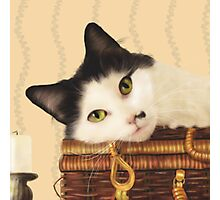 Cat on a picnic basket Photographic Print