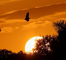 Everglades Sunset by William C. Gladish