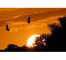 Everglades Sunset Photographic Print