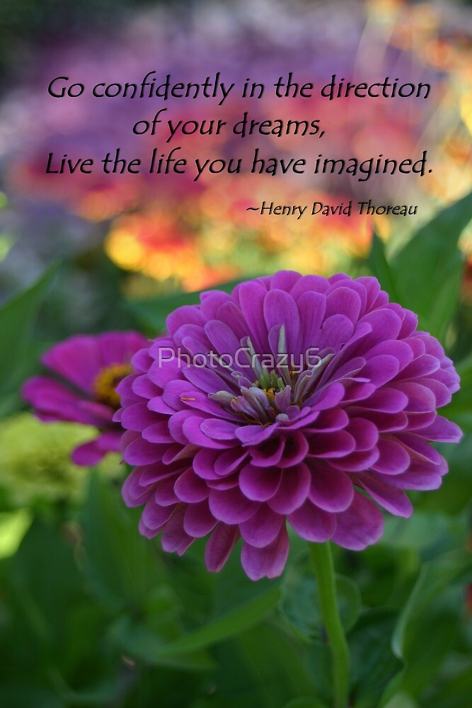Colorful Purple Zinnia Flower with Henry David Thoreau quote by PhotoCrazy6