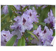 Purple Rhodies 2 Poster