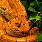yes, I'm orange! by mamba