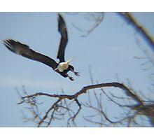 Flying Glory Photographic Print