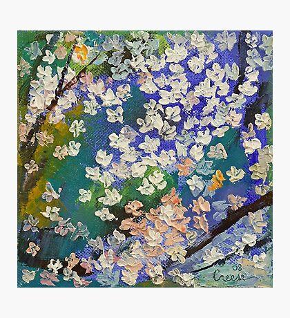 Sakura Oil Painting Photographic Print