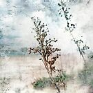 Fading Days by Susan Werby