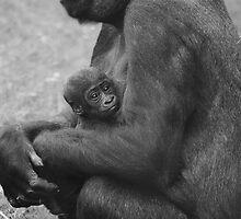 Baby Gorilla by Franco De Luca Calce
