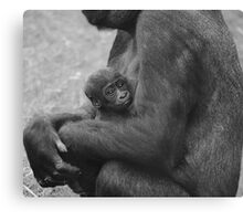 Baby Gorilla Canvas Print