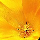 Macro of New Mexico Poppy by David DeWitt