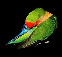 Sleeping Lovebird by Mellebel