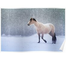 Equine Snowstorm Poster