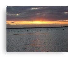 Black Swans on Lake Connewarre Canvas Print