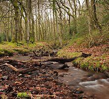 Stream Running through Holford Combe by kernuak