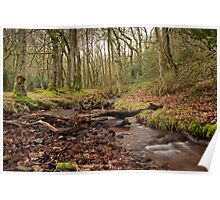 Stream Running through Holford Combe Poster