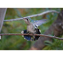 Broad- Billed Hummingbird Photographic Print