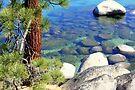 """""""Lake Bottom Colors"""" by Lynn Bawden"""