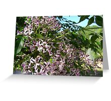 White Cedar Tree out in flower. Greeting Card