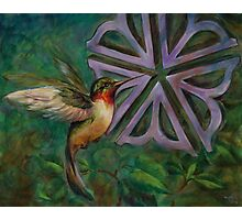 HummingBird with Rochester Flower Photographic Print
