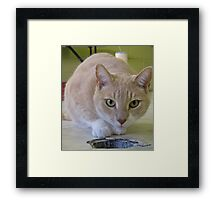 Grover exploring Framed Print