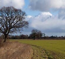 Country Walk by Cyrusdvirus