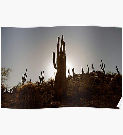 Sentinels Of The Desert Poster