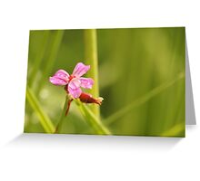 Pink Rain Flower Greeting Card