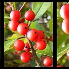 Berry Triptych by Jocelyn Hyers