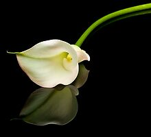 Calla Lily on Black Glass by Jim Felder