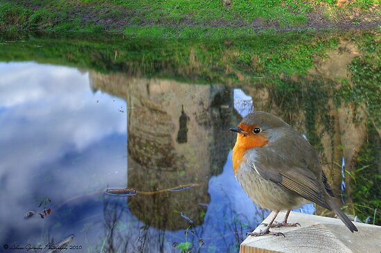 Robin enjoying the Castle Reflections by Adam Gormley