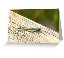 Blue Damselfy Greeting Card
