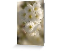 Fragrance In White_2 Greeting Card