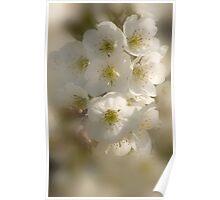 Fragrance In White_2 Poster