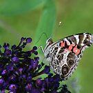 Pretty Lady on a Butterfly Bush by Bonnie Robert