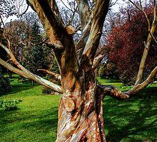 Twisting To Nature's Tune by Wrayzo