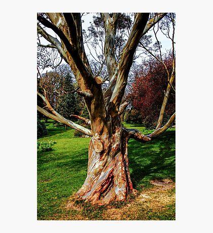 Twisting To Nature's Tune Photographic Print