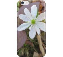 Hepatica Bloom iPhone Case/Skin