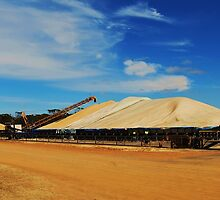 The Grain Bins filling up during Harvest, western Australia by Ashley-Nicole