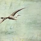 Soaring by Trish Woodford