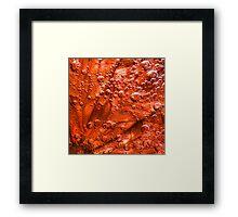 Blood Grapefruit in fizzy water Framed Print