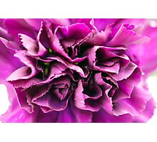 Closeup Purple Flower Photographic Print