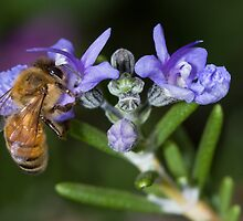 Working Bee by Peter Pevy