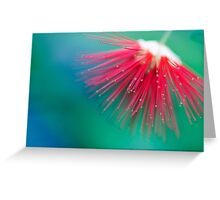 Burst of Colour Greeting Card